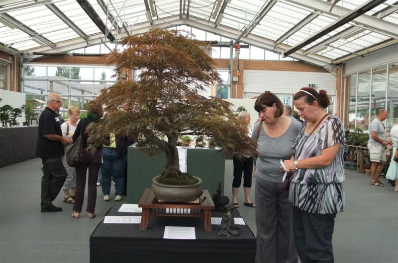 Wirral Bonsai Society Annual Members Show Result 2012 Dscf2715