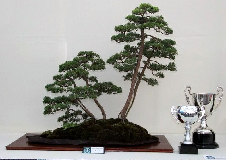 Wirral Bonsai Society Annual Members Show Result 2012 Dscf2916