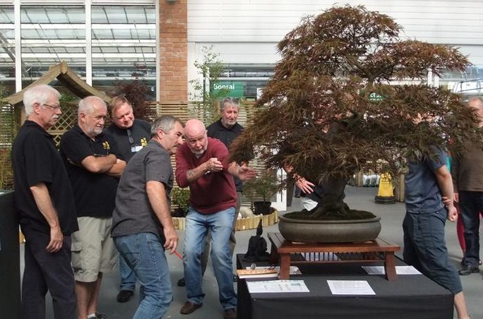 Wirral Bonsai Society Annual Members Show Result 2012 Dscf2918