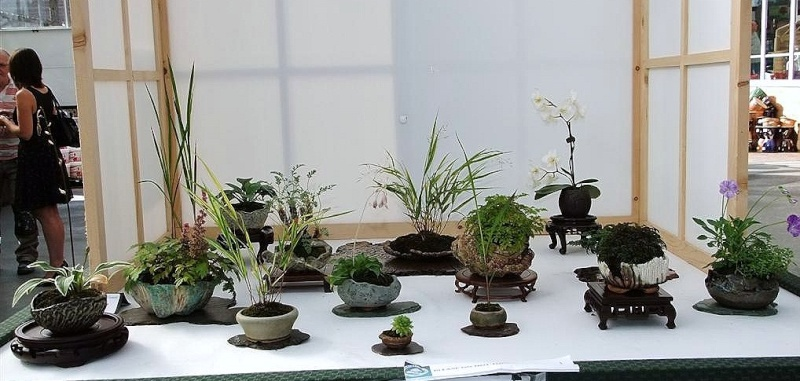 Wirral Bonsai Society Annual Members Show Result 2012 Dscf3017
