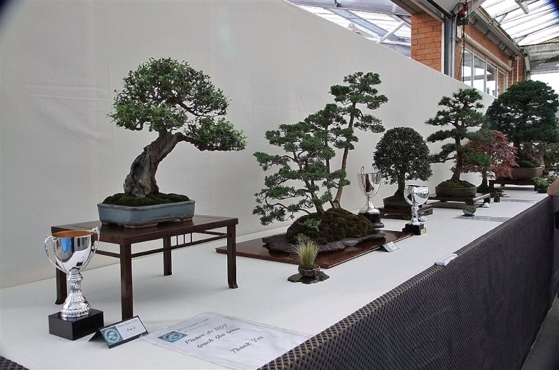 Wirral Bonsai Society Annual Members Show Result 2012 Dscf3019