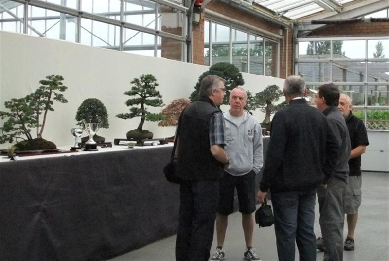 Wirral Bonsai Society Annual Members Show Result 2012 Dscf3111