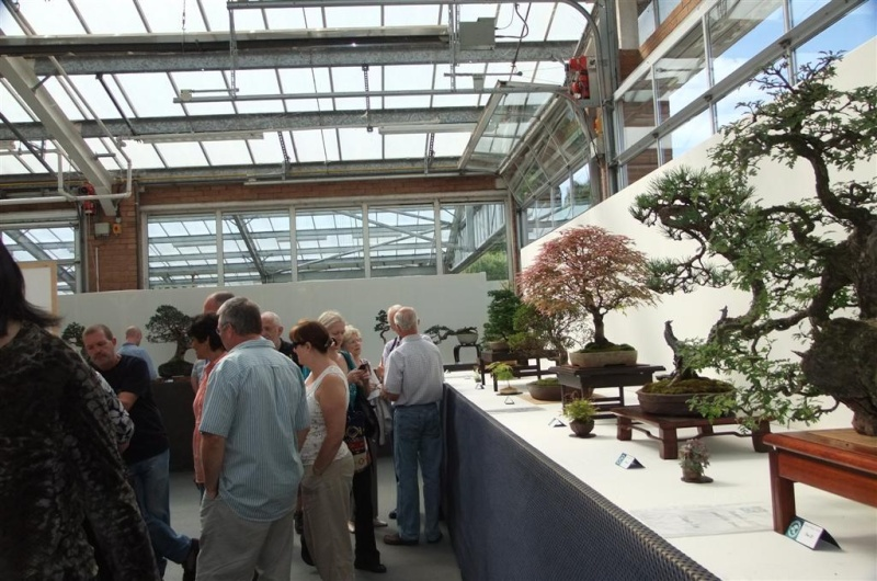 Wirral Bonsai Society Annual Members Show Result 2012 Dscf3211