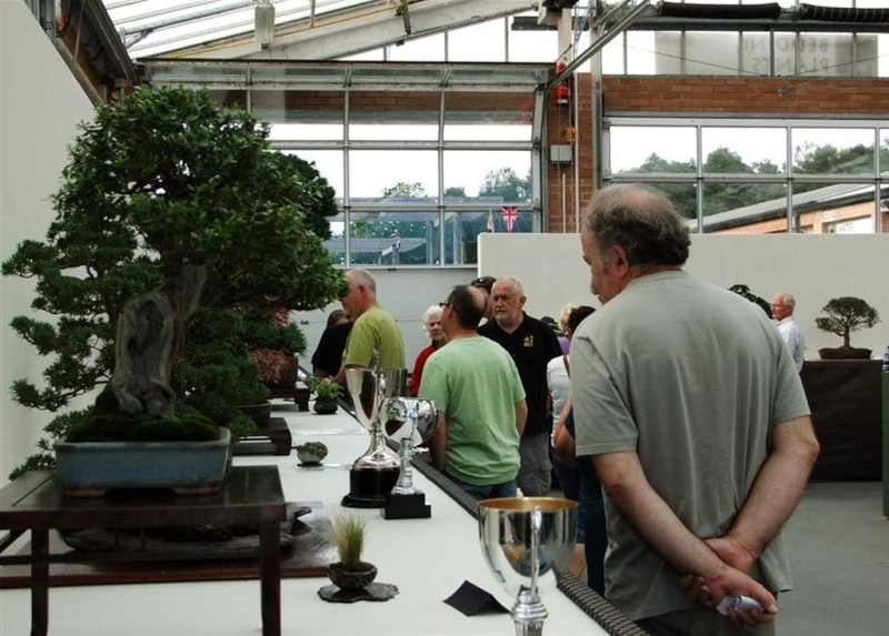 Wirral Bonsai Society Annual Members Show Result 2012 Dscf3412