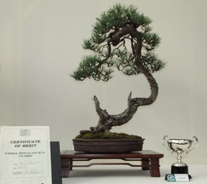 Wirral Bonsai Society Annual Members Show Result 2012 Tony_s10