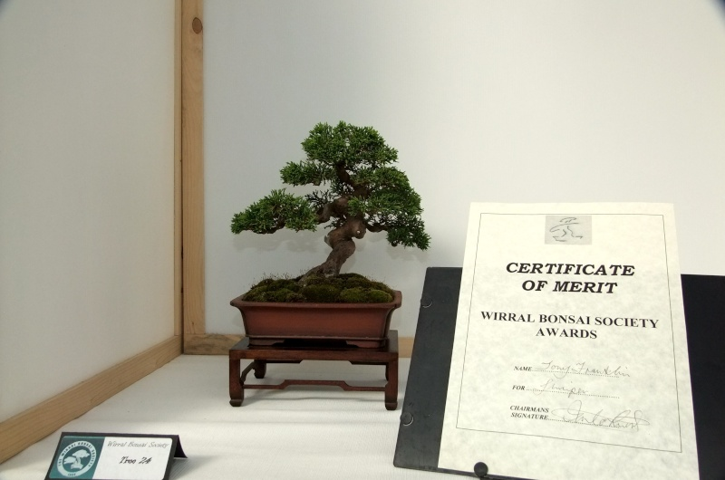 Wirral Bonsai Society Annual Members Show Result 2012 Tony_s13
