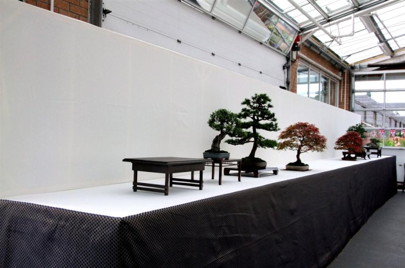 Wirral Bonsai Society Annual Members Show Result 2012 W-b-s_26