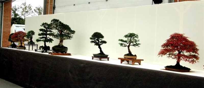 Wirral Bonsai Society Annual Members Show Result 2012 W-b-s_30