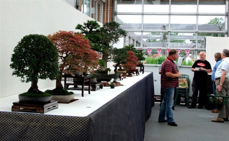 Wirral Bonsai Society Annual Members Show Result 2012 W-b-s_31