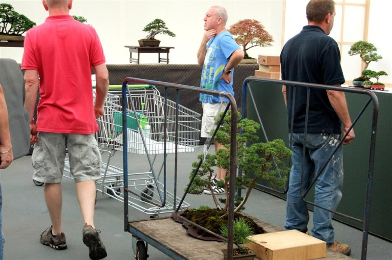 Wirral Bonsai Society Annual Members Show Result 2012 W-b-s_32
