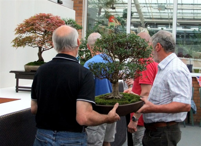 Wirral Bonsai Society Annual Members Show Result 2012 W-b-s_33