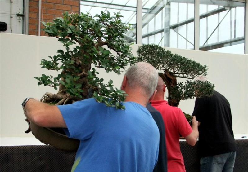 Wirral Bonsai Society Annual Members Show Result 2012 W-b-s_34
