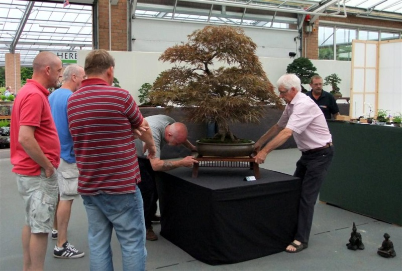 Wirral Bonsai Society Annual Members Show Result 2012 W-b-s_35