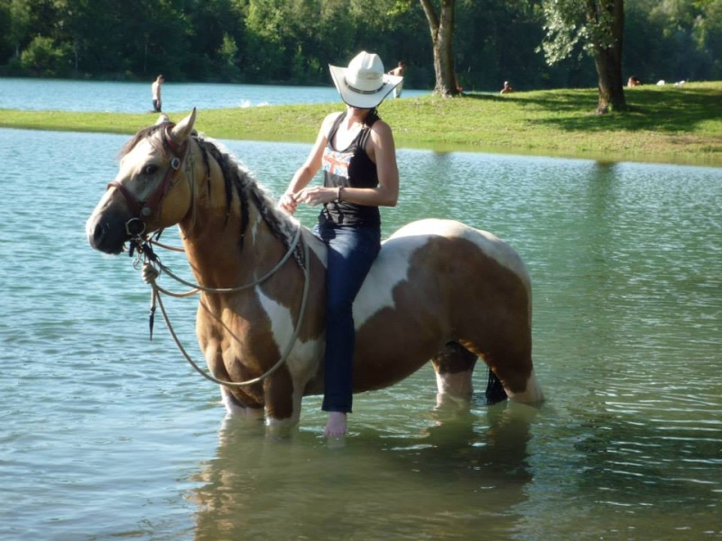 POST A SUPPRIMER :-)Jeune Paint Horse en Demi Pension, Pontcharra 10134010
