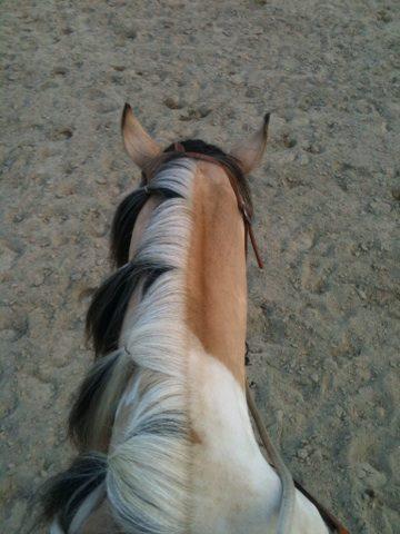 POST A SUPPRIMER :-)Jeune Paint Horse en Demi Pension, Pontcharra 10171010