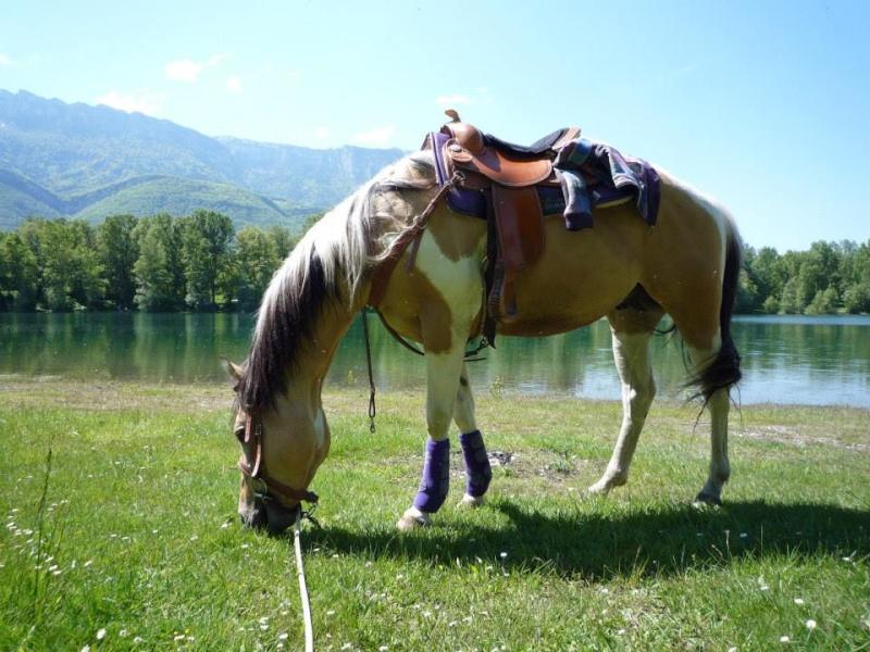POST A SUPPRIMER :-)Jeune Paint Horse en Demi Pension, Pontcharra 60073611