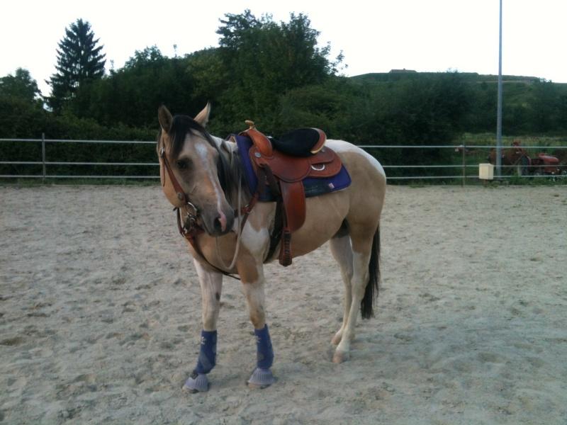 POST A SUPPRIMER :-)Jeune Paint Horse en Demi Pension, Pontcharra Photo111