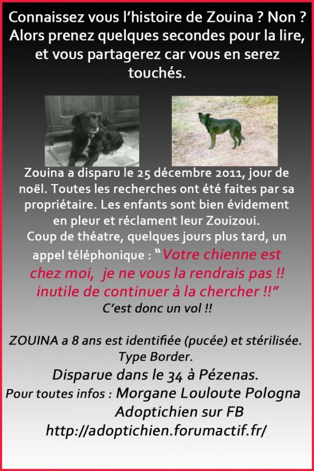 Perdu/volée chienne type Border collie Zouina10