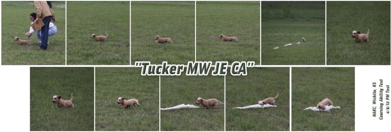 Tucker CA ME (1 EE Q) Tucker11