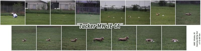 Tucker CA ME (1 EE Q) Tucker12