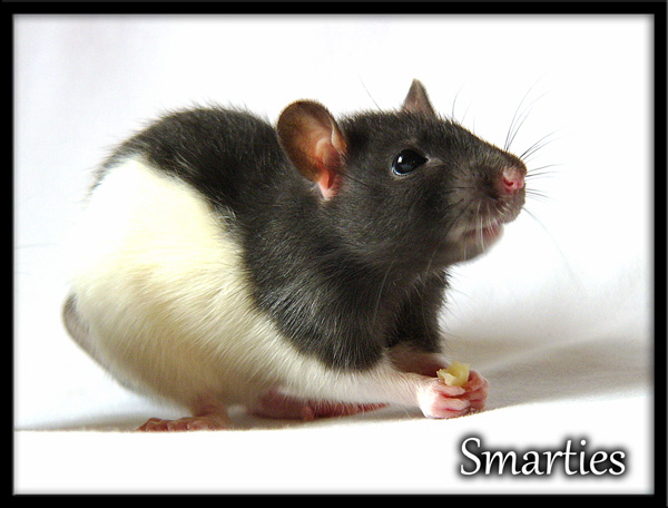 Smarties et Smoothie Smarti11