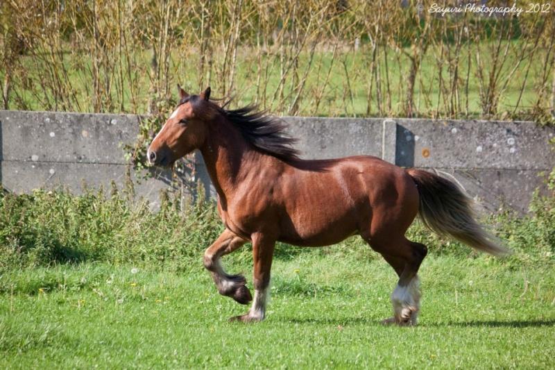 Red Dean des Légendes Celtiques 38426210