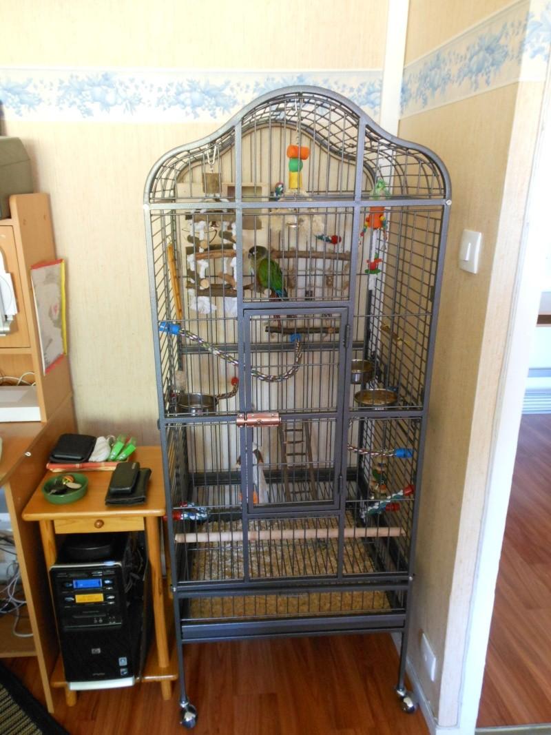 Nouvelle Cage pour Kico Dscn0810