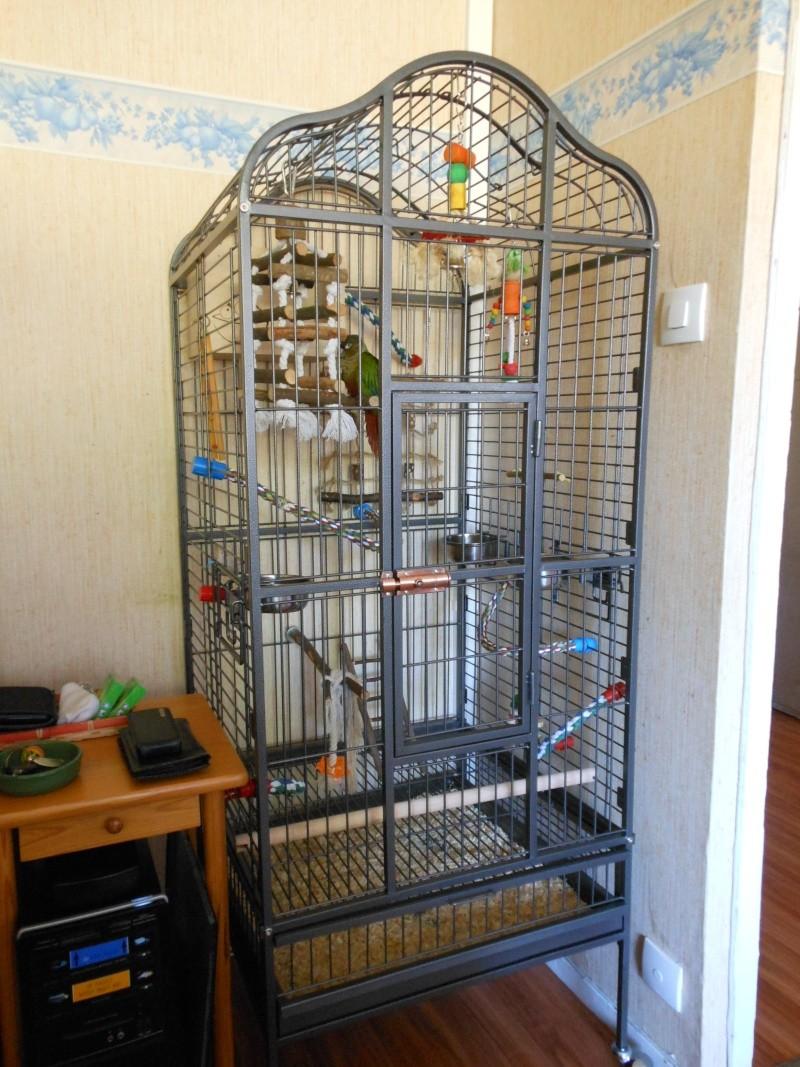 Nouvelle Cage pour Kico Dscn0812