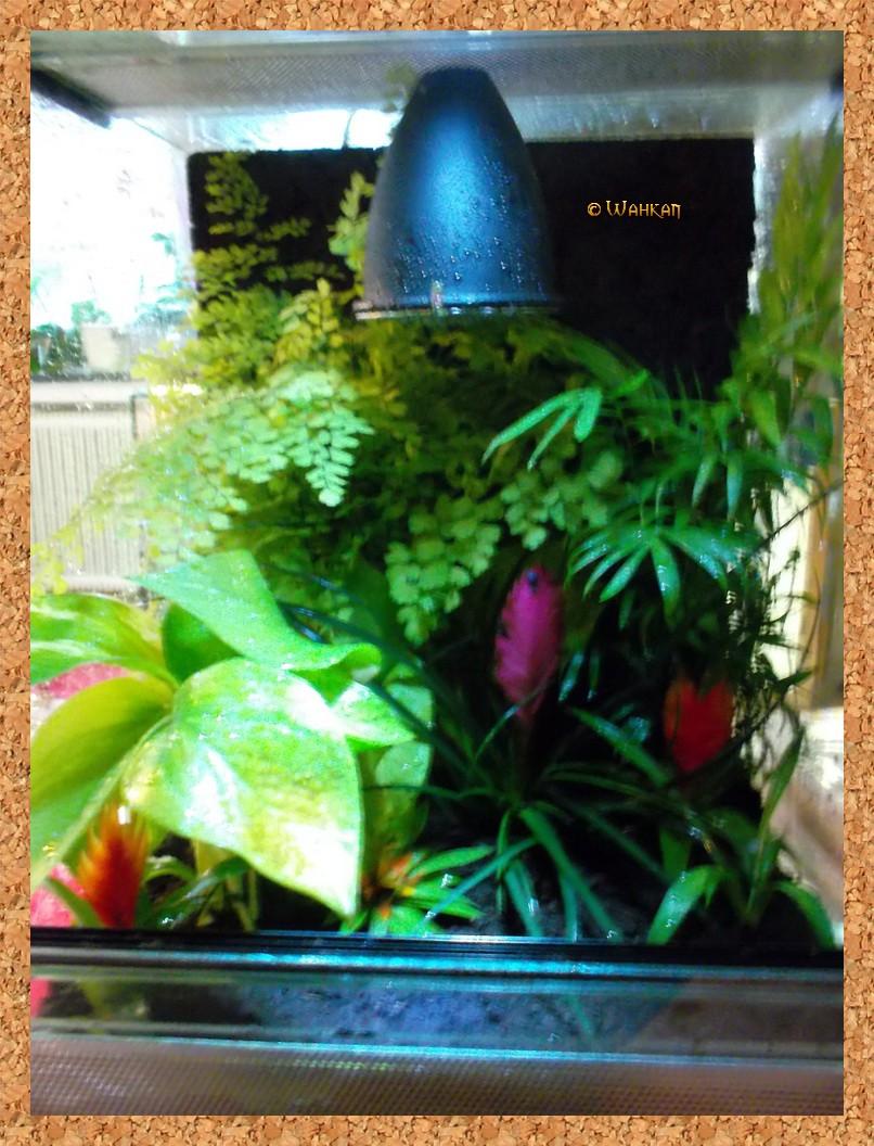 Tuto : Faire un terrarium naturel 10_pla10