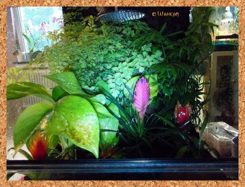 Tuto : Faire un terrarium naturel 12_fle10