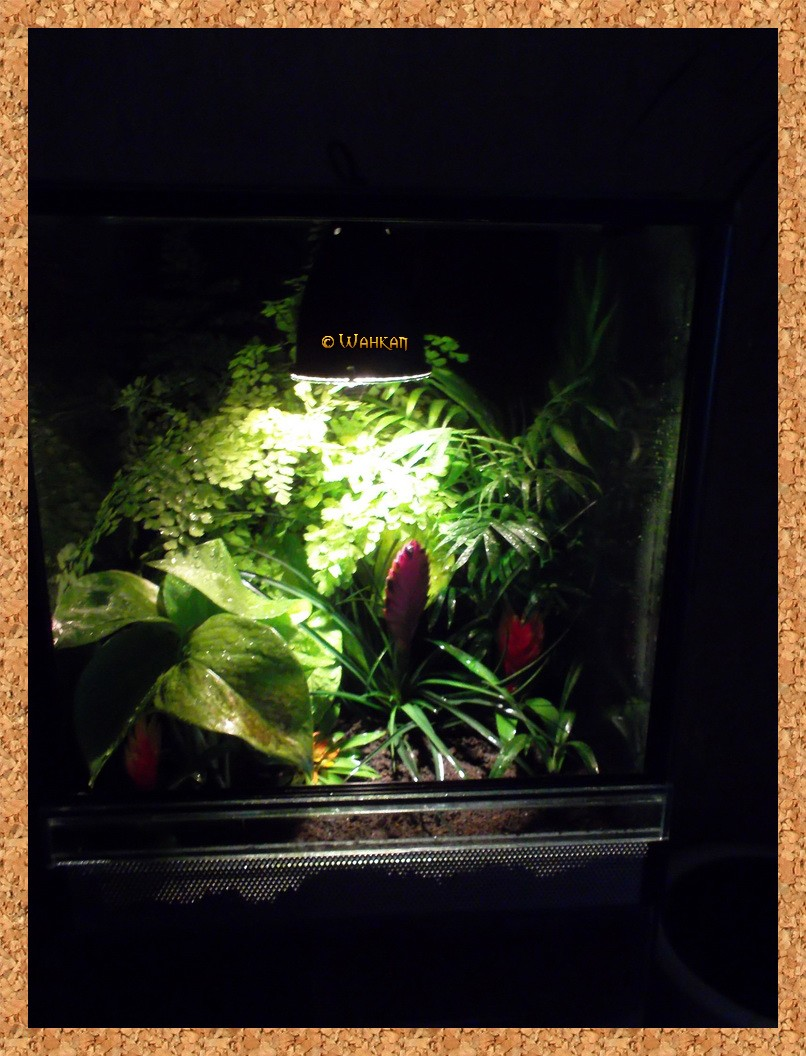 Tuto : Faire un terrarium naturel 13_pla10