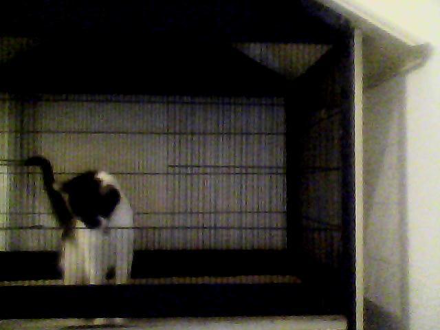 Vends cage et volière (80-Amiens) Tphoto11
