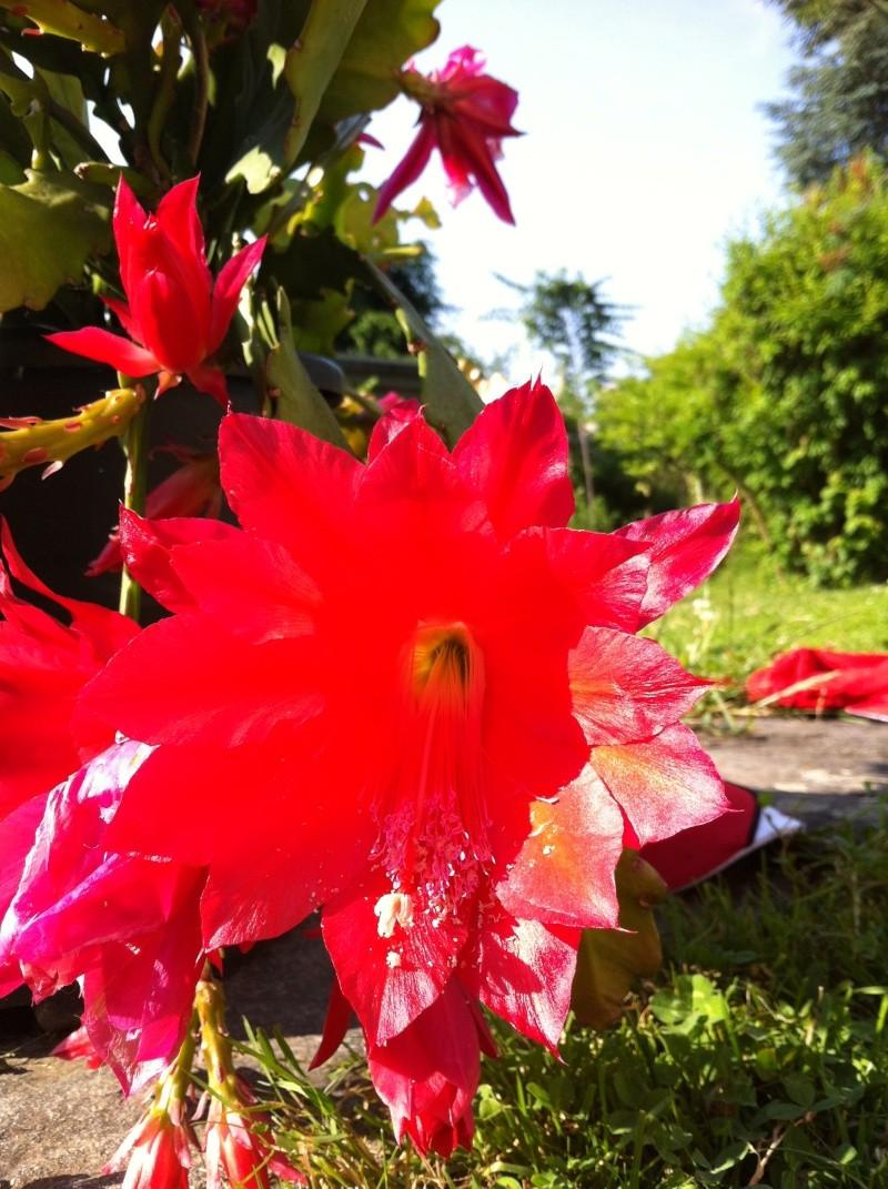34 - La couleur rouge.........photos reçues !!! Img_1411