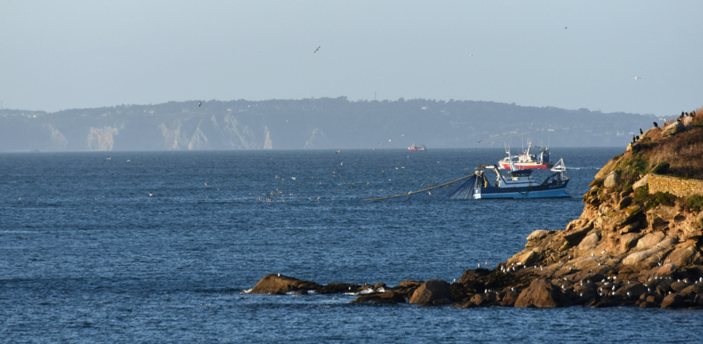 [VIE DES PORTS] Quelques bateaux de pêche (sur nos côtes Françaises) - Page 7 Dsc_0052