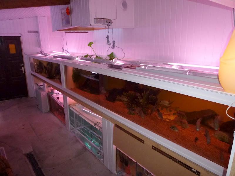 aquarium bois de 2600 l centre americain P1000310