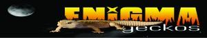 Asociacion Española de Terrariofilia Geckos11
