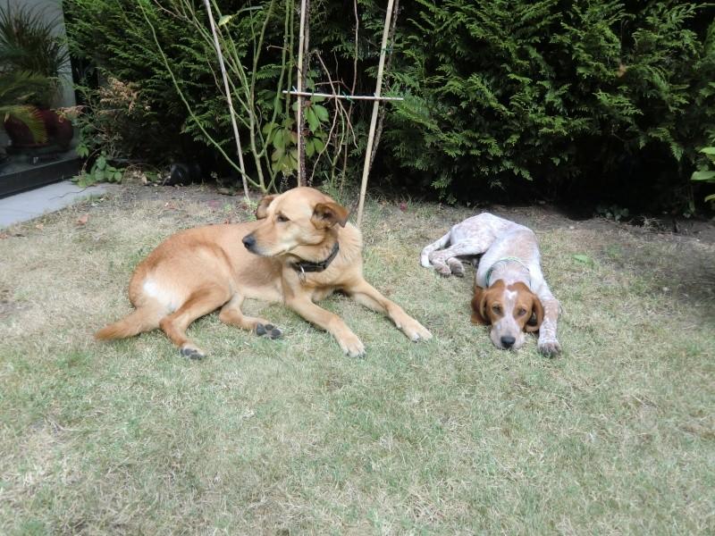 Scoobydoo, chiot 6 mois trouvé à Meria corse du nord - adopté - Page 2 Cimg5810