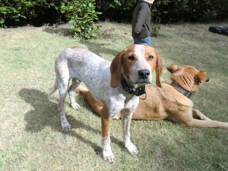 Scoobydoo, chiot 6 mois trouvé à Meria corse du nord - adopté - Page 2 Cimg5811