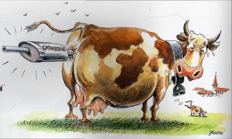 Des vaches bien ballonnées Burki_10