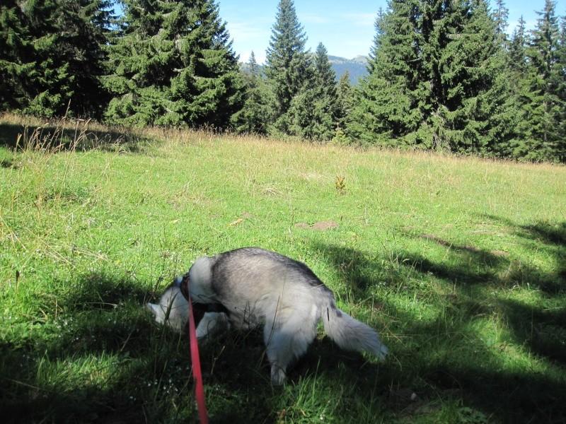 Saskia dans le Jura 113