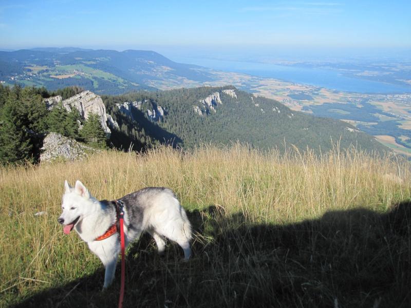 Saskia dans le Jura 1411