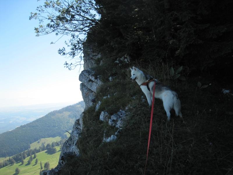 Saskia dans le Jura 311