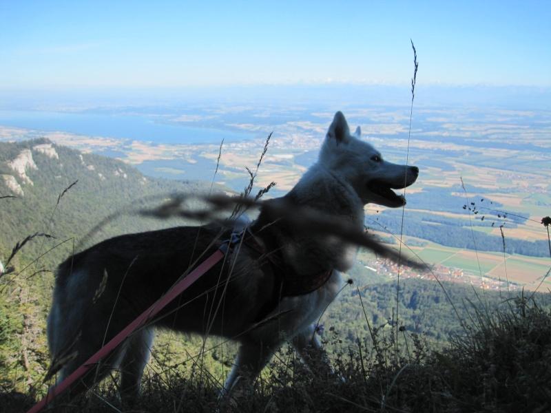 Saskia dans le Jura 611