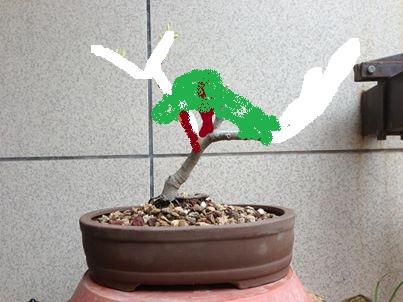 Nuovo arrivato, Ficus Carica 10439410