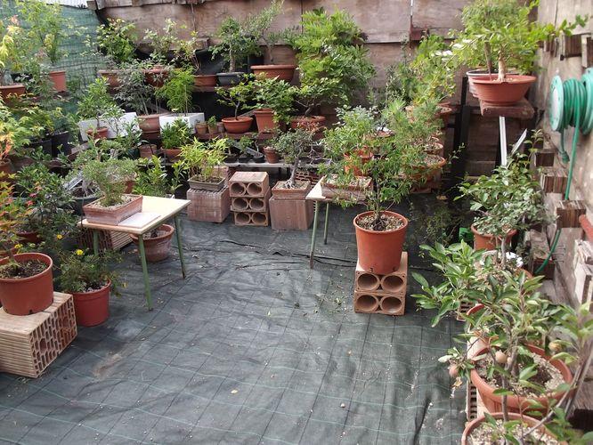 le mie piante (quasi) a posto! Dscf7018