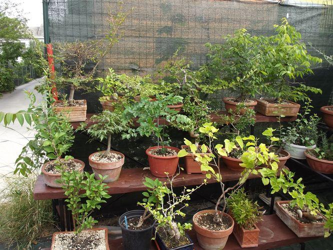 le mie piante (quasi) a posto! Dscf7019