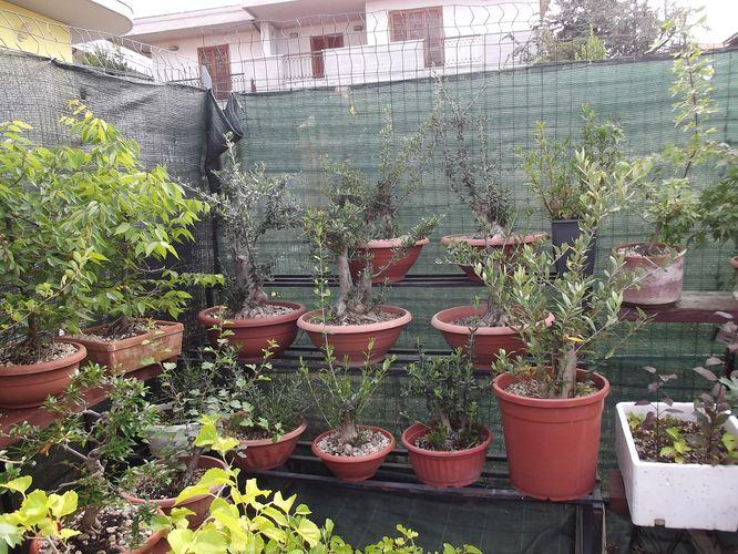 le mie piante (quasi) a posto! Dscf7022