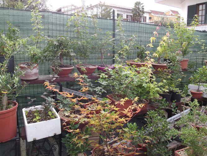 le mie piante (quasi) a posto! Dscf7023