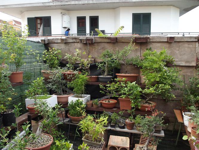 le mie piante (quasi) a posto! Dscf7024