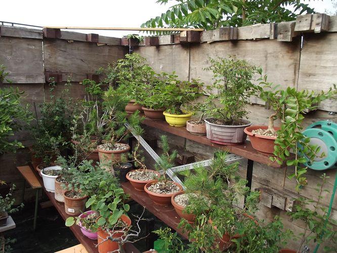 le mie piante (quasi) a posto! Dscf7025